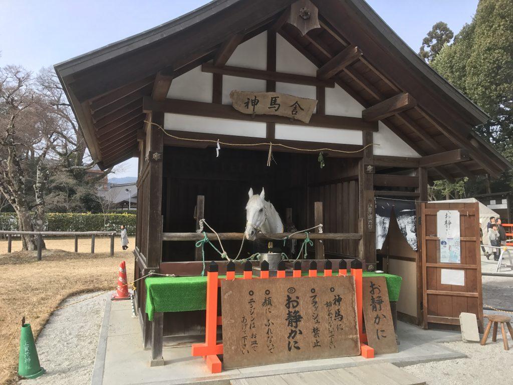 上賀茂神社 神馬